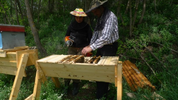 top-bar hive - natural bee keeping